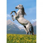 Puzzle 500 pices - Cheval blanc cabr