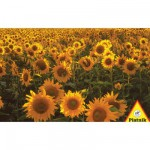 Puzzle 1000 pices - Etendue de tournesols