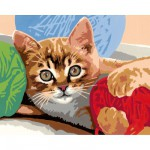 Peinture au numro : Numro d'Art Grand format : Chaton  la pelote de laine