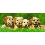 Puzzle 200 pices XXL panoramique - Quatre petits chiots Labrador