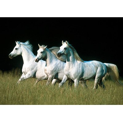 Horse Puzzles on Trefl   Jigsaw Puzzle   500 Pieces   Arab Horses   Jigsaw Puzzle Road