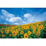 Puzzle 1000 pices - Champ de tournesol