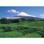 Puzzle 500 pices - Mont Fuji : Plantation de th